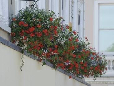 In Bloom floral baskets over shop front in Bury St Edmunds.