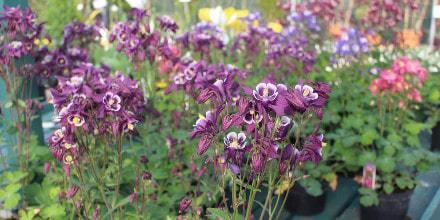 Flower garden bedding plants