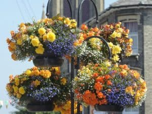 In Bloom Hanging baskets in Bury St Edmunds