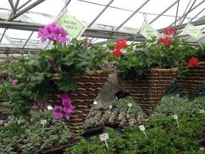 Hanging baskets, hand-made and ready to go