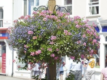 Hanging baskets for Stowmarket In Bloom.