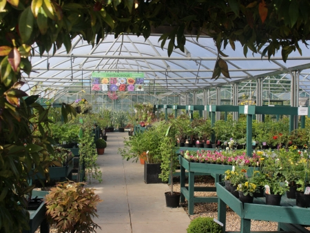 Hardy plant centre, Woolpit Nurseries