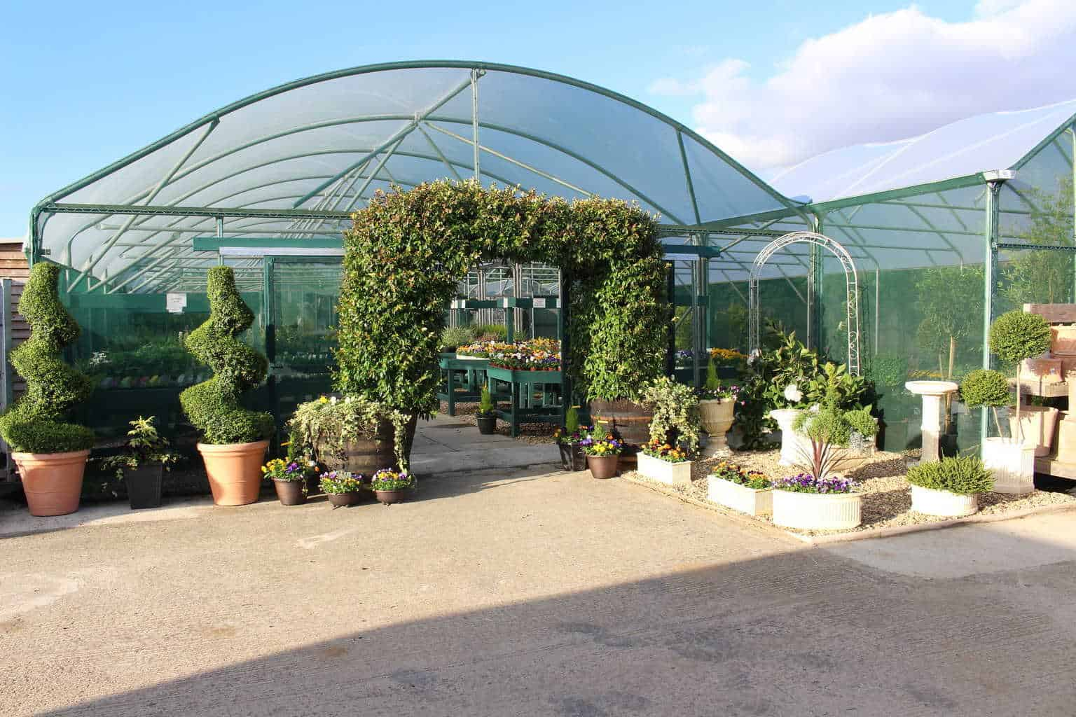 Jasmine arch at the Hardy Centre, Woolpit Nurseries