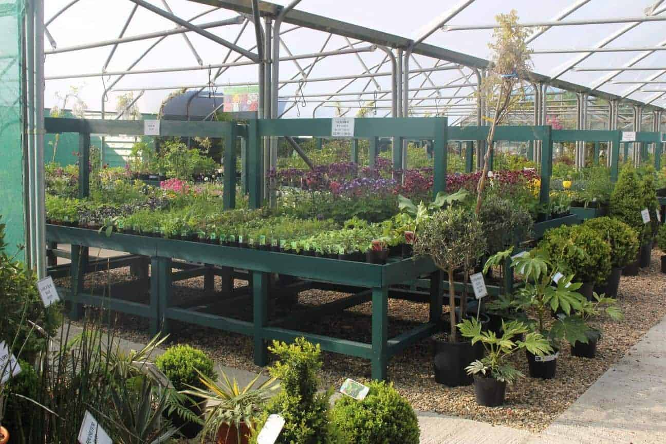 Perennials, Shrubs, Structural plants
