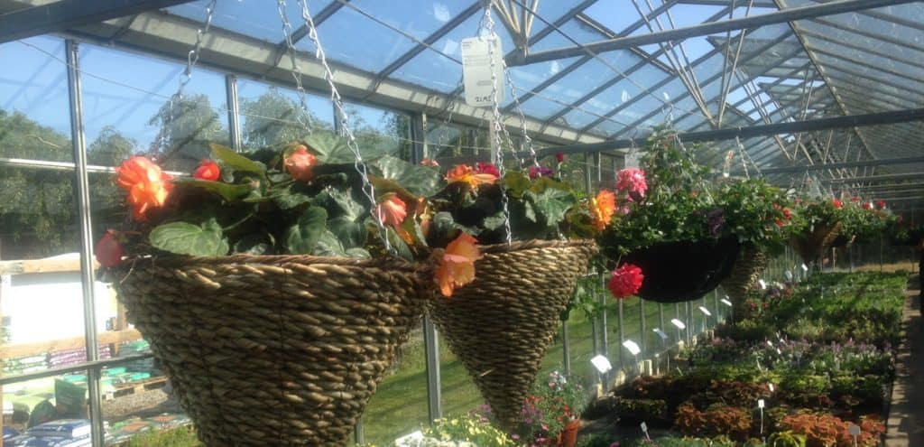 slider hanging baskets at Woolpit Nurseries
