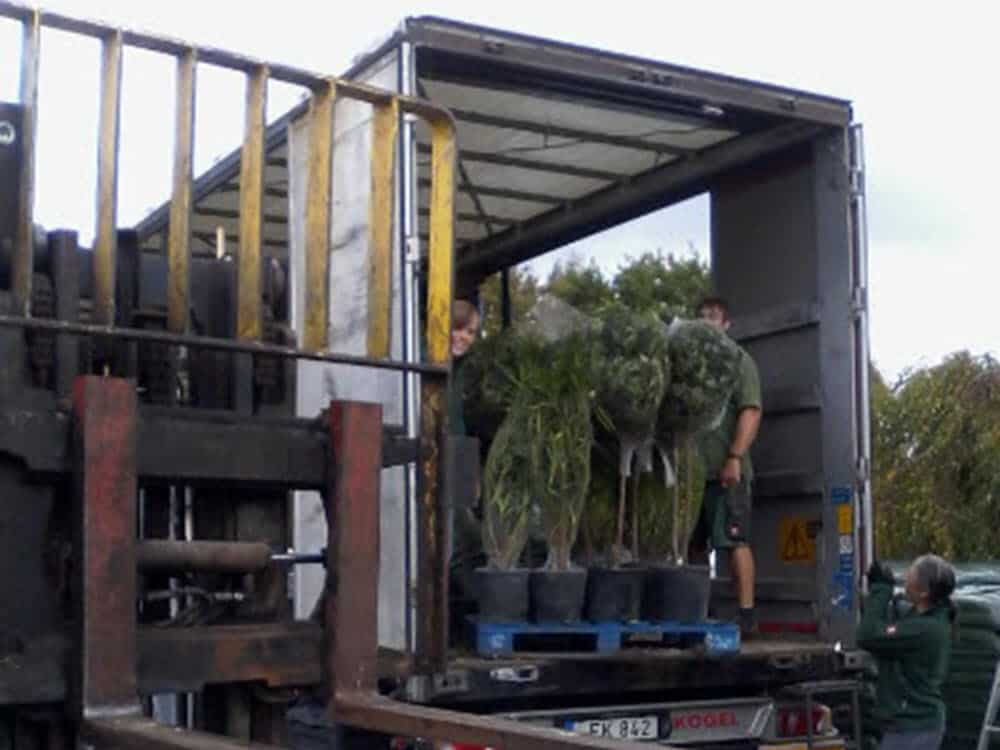Italian shrubs delivered direct from Italy